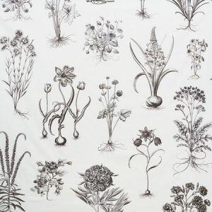 178740 CABOT BOTANICAL LARGE Ivory Schumacher Fabric