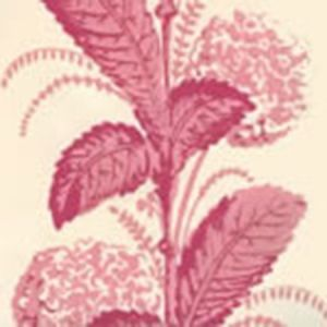 303306WP CLIMBING HYDRANGEA Pink On Almost White Quadrille Wallpaper
