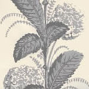 303307WP CLIMBING HYDRANGEA Gray On Almost White Quadrille Wallpaper