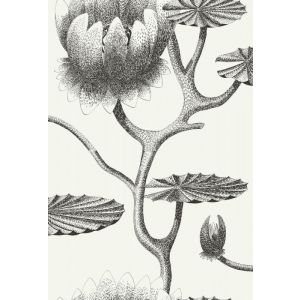 95/4020-CS LILY Black White Cole & Son Wallpaper