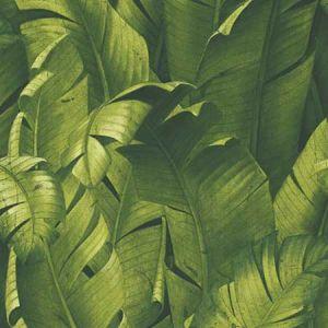 NW31000 Tropical Banana Leaves Seabrook Wallpaper
