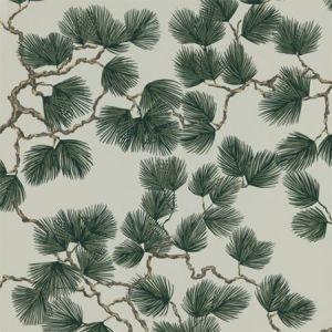 WSB 0078 0804 PINE Evergreen Sandberg Wallpaper