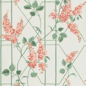 115/5012-CS WISTERIA Coral Sage Parchment Cole & Son Wallpaper