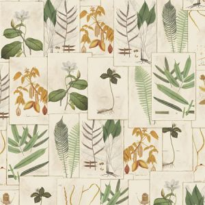 9WB112 LIMONIUM Document 01 Vervain Wallpaper