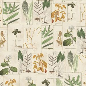 9WA112 LIMONIUM Document 01 Vervain Wallpaper