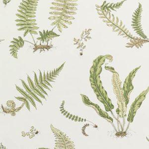 BW45044-10 Ferns Leaf GP & J Baker Wallpaper