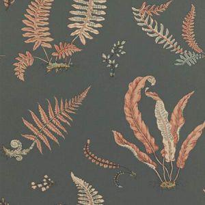 BW45044-13 Ferns Coral Charcoal GP & J Baker Wallpaper