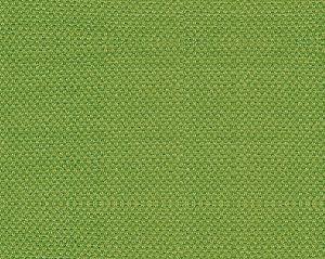 B8 00130110 SCIROCCO Tendril Scalamandre Fabric
