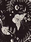 6780CU-13 CIREBON REVERSE Black on Tint Quadrille Fabric