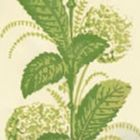 303305WP CLIMBING HYDRANGEA Lime On Almost White Quadrille Wallpaper