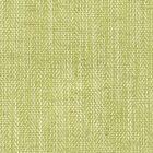 BERLIN 35 Seedling Stout Fabric