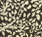 2035-07 ARBRE DE MATISSE REVERSE Brown on Tint Quadrille Fabric
