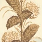 303300WP CLIMBING HYDRANGEA Taupe On Almost White Quadrille Wallpaper